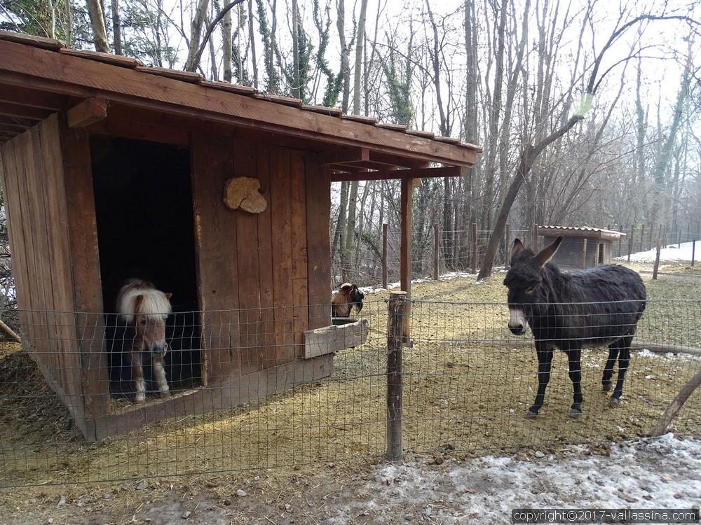 BARNI – Troppo amore per gli animali, sfrattati un pony, un asinello e una capretta.